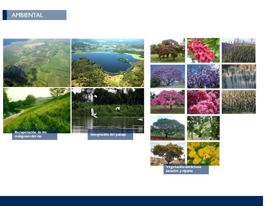 AMBIENTAL Recuperación de los márgenes del rio Integración del paisaje Vegetación autóctona lacustre y riparia