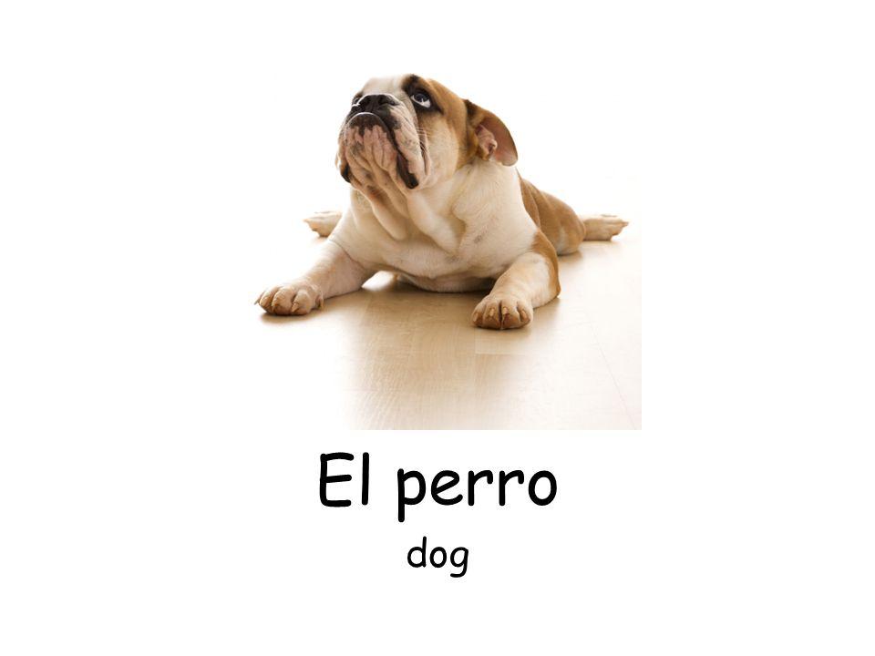 El perro dog