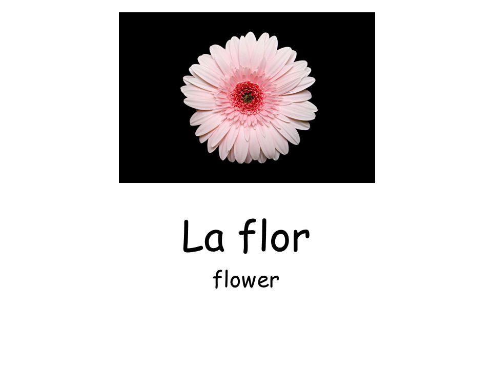 La flor flower