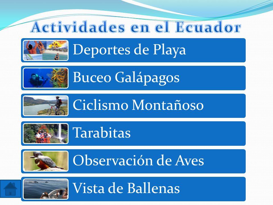 Deportes de Playa Buceo Galápagos Ciclismo Montañoso Tarabitas Observación de Aves Vista de Ballenas