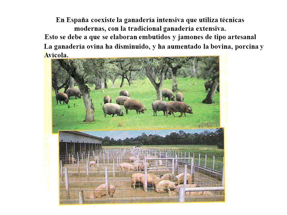 En España coexiste la ganadería intensiva que utiliza técnicas modernas, con la tradicional ganadería extensiva. Esto se debe a que se elaboran embuti