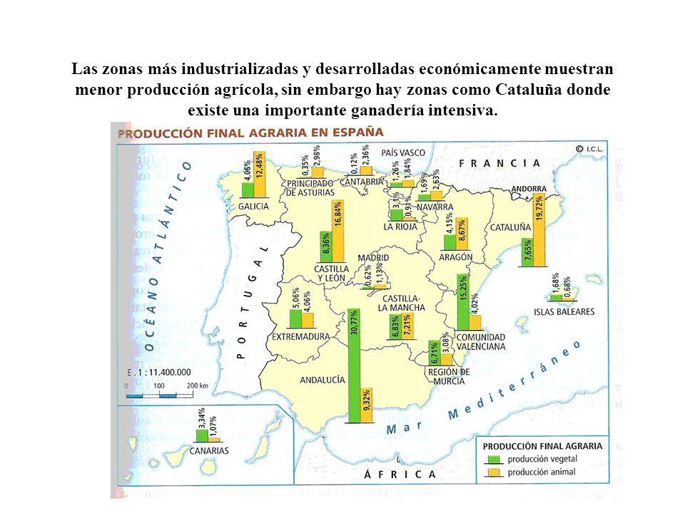 Las zonas más industrializadas y desarrolladas económicamente muestran menor producción agrícola, sin embargo hay zonas como Cataluña donde existe una