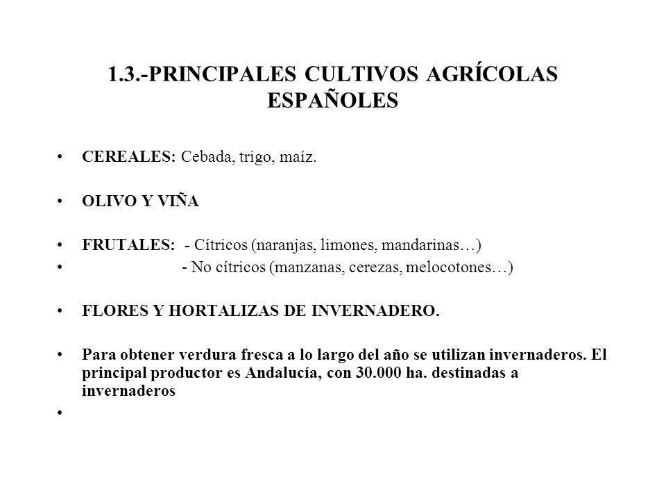 1.3.-PRINCIPALES CULTIVOS AGRÍCOLAS ESPAÑOLES CEREALES: Cebada, trigo, maíz. OLIVO Y VIÑA FRUTALES: - Cítricos (naranjas, limones, mandarinas…) - No c