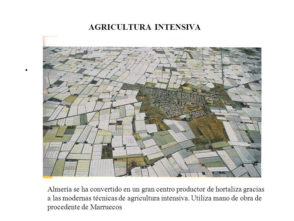 AGRICULTURA INTENSIVA Almería se ha convertido en un gran centro productor de hortaliza gracias a las modernas técnicas de agricultura intensiva. Util