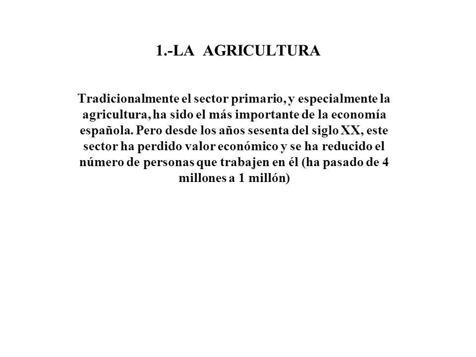 1.-LA AGRICULTURA Tradicionalmente el sector primario, y especialmente la agricultura, ha sido el más importante de la economía española. Pero desde l
