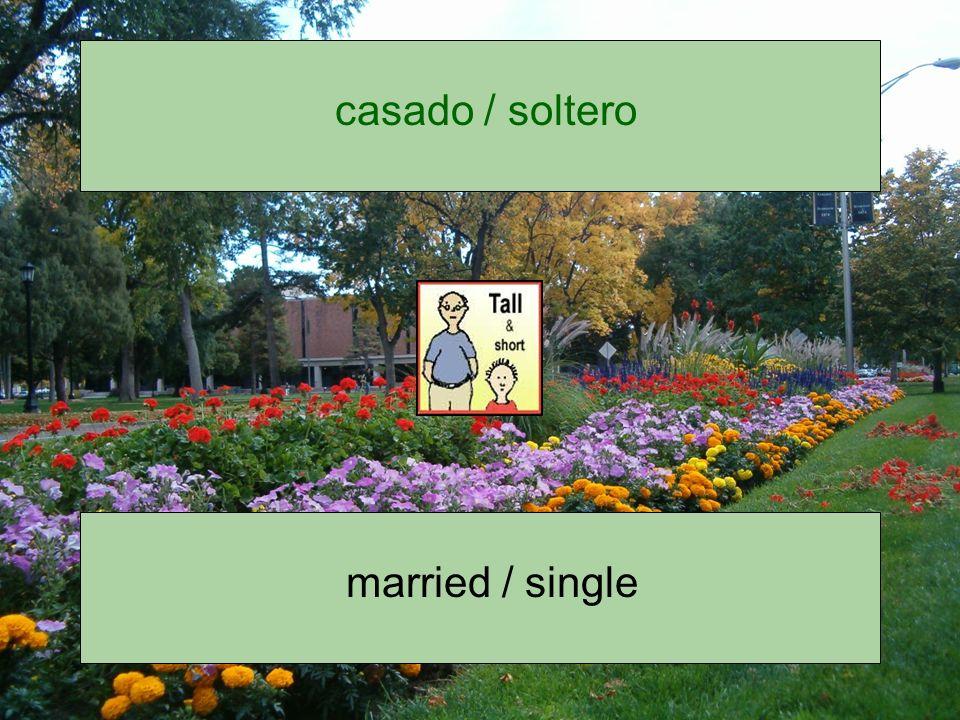 casado / soltero