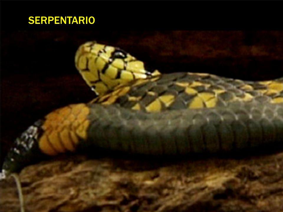 SERPENTARIO
