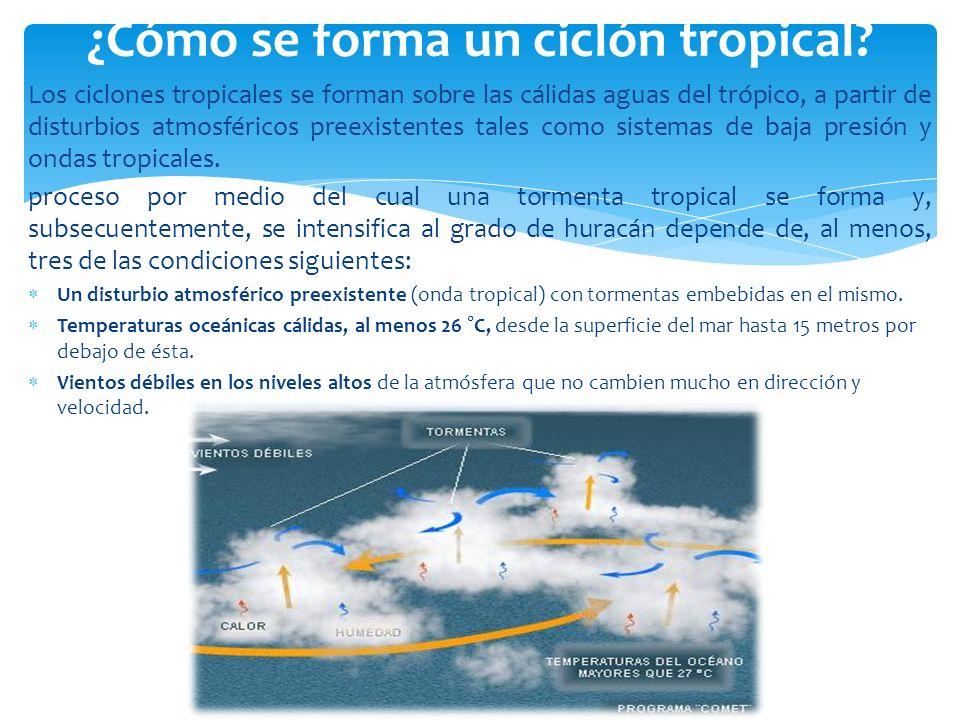 Los ciclones tropicales se forman sobre las cálidas aguas del trópico, a partir de disturbios atmosféricos preexistentes tales como sistemas de baja p