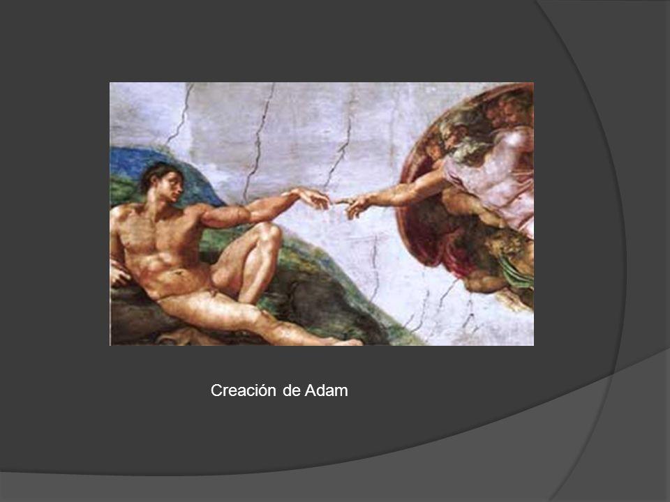 Creación de Adam