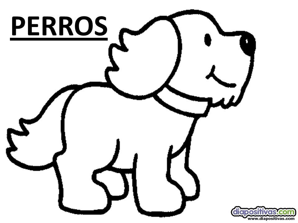 Bobtail El perro Bobtail o perro pastor inglés, de carácter tolerante, es un perro excelente para la convivencia con niños y otras mascotas.
