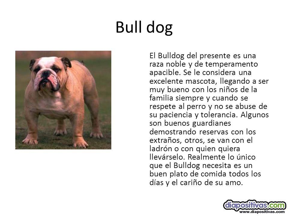 Bull dog El Bulldog del presente es una raza noble y de temperamento apacible.