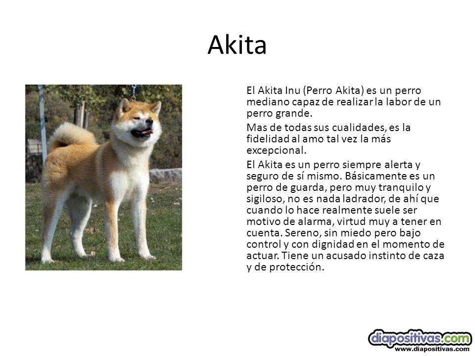 Akita El Akita Inu (Perro Akita) es un perro mediano capaz de realizar la labor de un perro grande.
