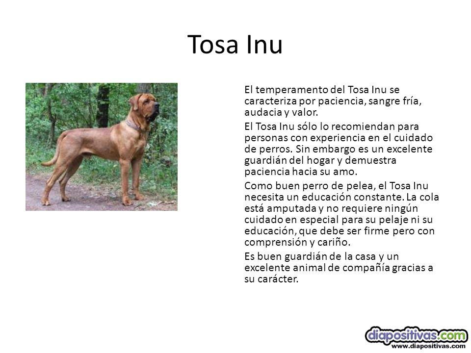 Tosa Inu El temperamento del Tosa Inu se caracteriza por paciencia, sangre fría, audacia y valor.