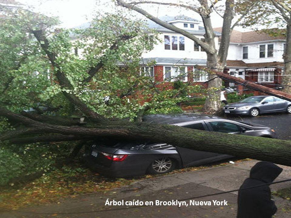 Árbol caído en Brooklyn, Nueva York