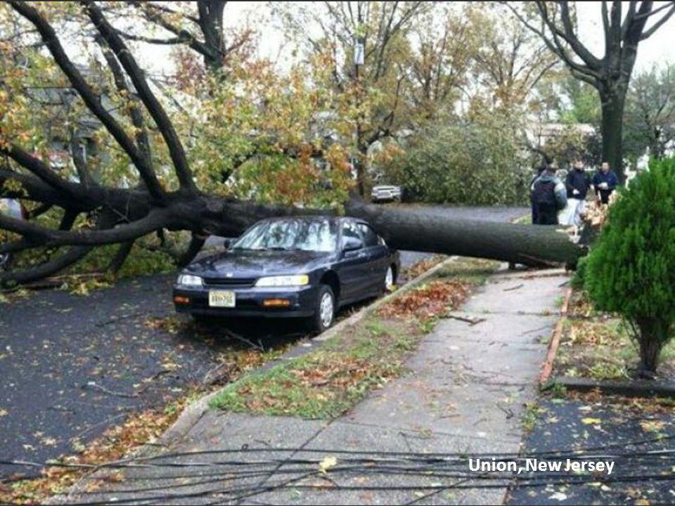 Árbol arrancado de raíz, Astoria, NY