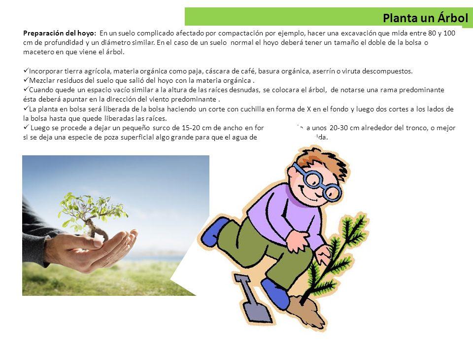 Planta un Árbol Preparación del hoyo: En un suelo complicado afectado por compactación por ejemplo, hacer una excavación que mida entre 80 y 100 cm de profundidad y un diámetro similar.