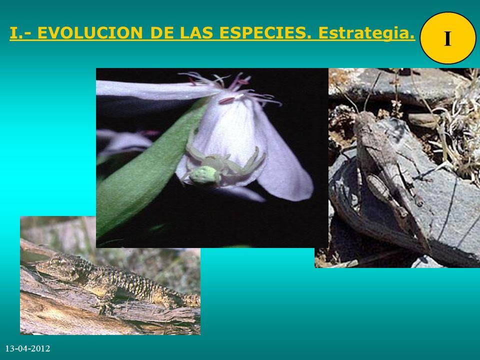 13-04-2012 JORNADA GLOBAL LLEIDA I.- EVOLUCION DE LAS ESPECIES.
