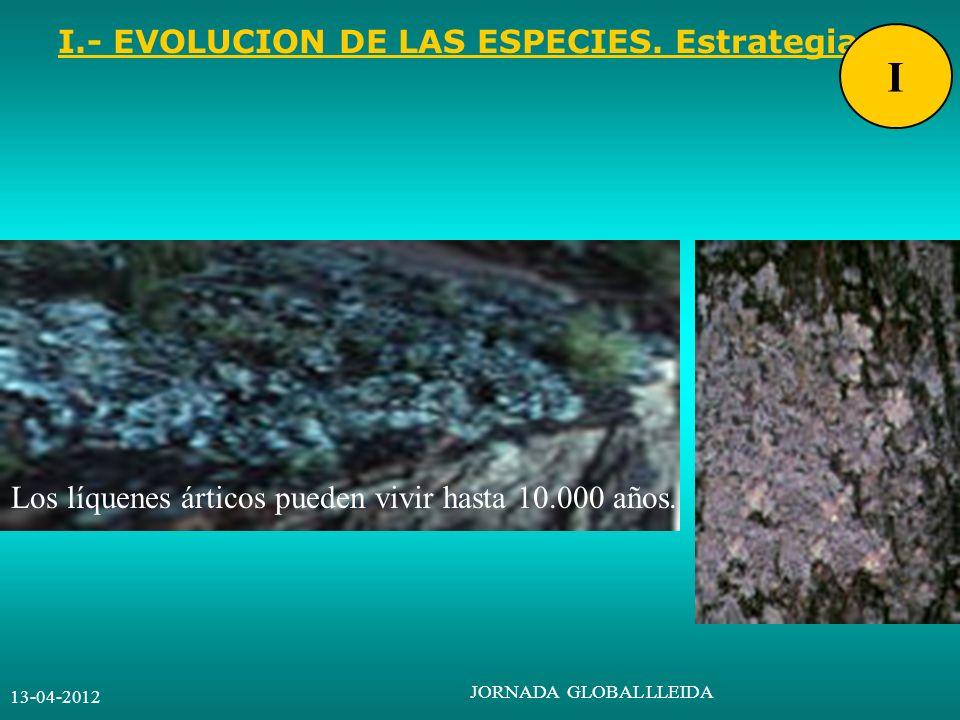 13-04-2012 JORNADA GLOBAL LLEIDA I.- EVOLUCION DE LAS ESPECIES. Estrategia. I Los líquenes árticos pueden vivir hasta 10.000 años.