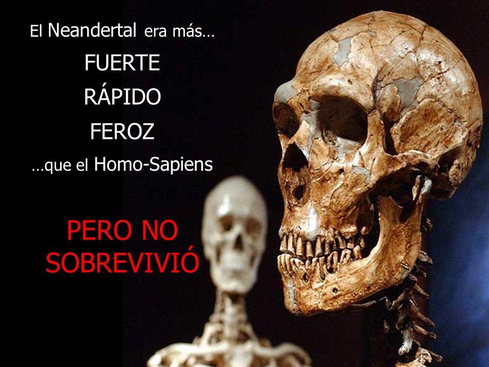 El Neandertal era más… FUERTE RÁPIDO FEROZ …que el Homo-Sapiens PERO NO SOBREVIVIÓ