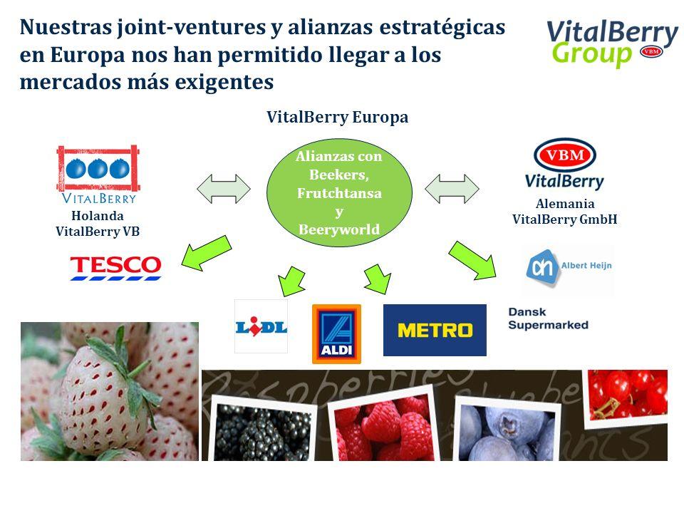Nuestras joint-ventures y alianzas estratégicas en Europa nos han permitido llegar a los mercados más exigentes VitalBerry Europa Alianzas con Beekers