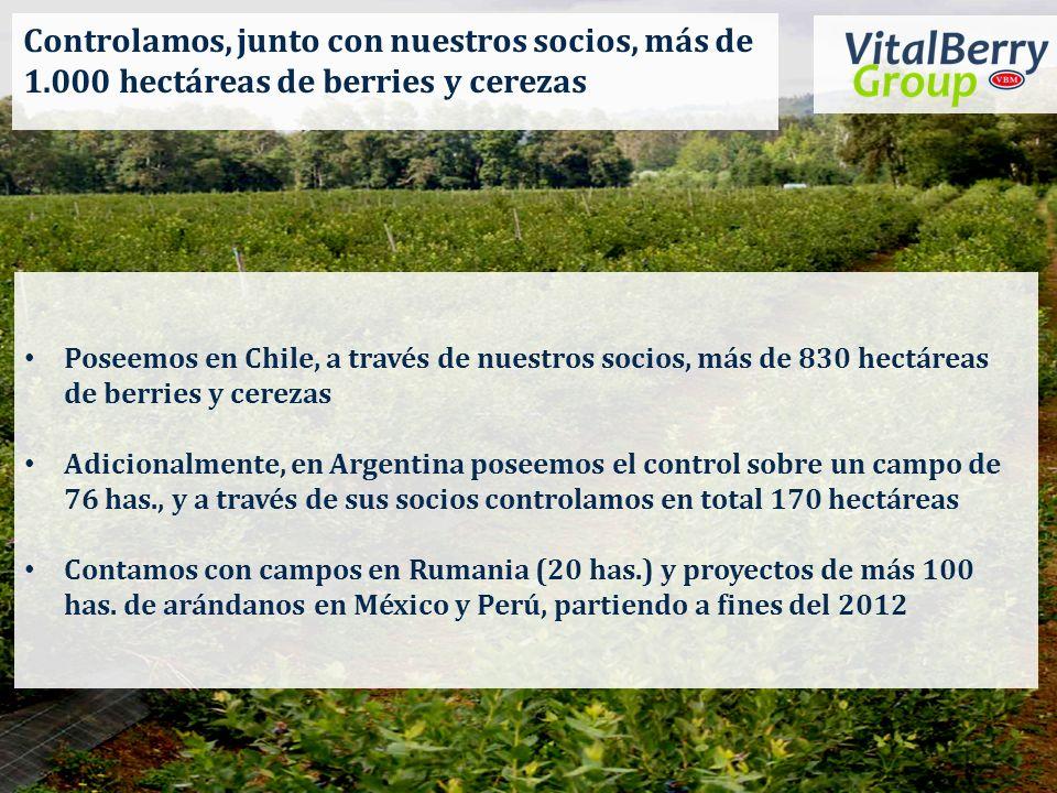 Controlamos, junto con nuestros socios, más de 1.000 hectáreas de berries y cerezas Poseemos en Chile, a través de nuestros socios, más de 830 hectáre