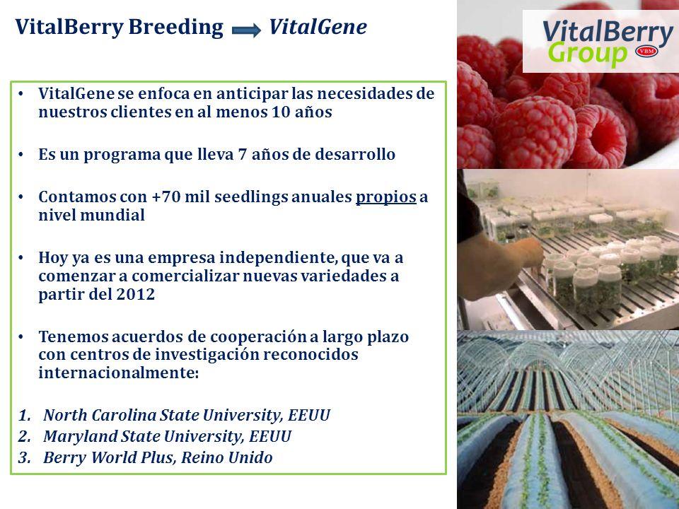 VitalBerry Breeding VitalGene VitalGene se enfoca en anticipar las necesidades de nuestros clientes en al menos 10 años Es un programa que lleva 7 año