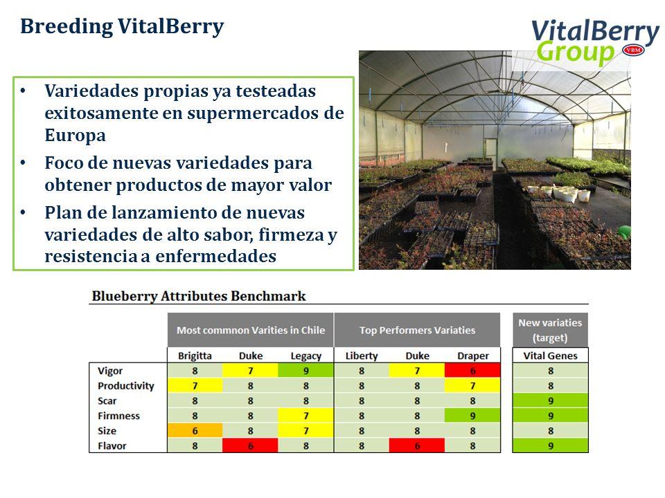 Breeding VitalBerry Variedades propias ya testeadas exitosamente en supermercados de Europa Foco de nuevas variedades para obtener productos de mayor
