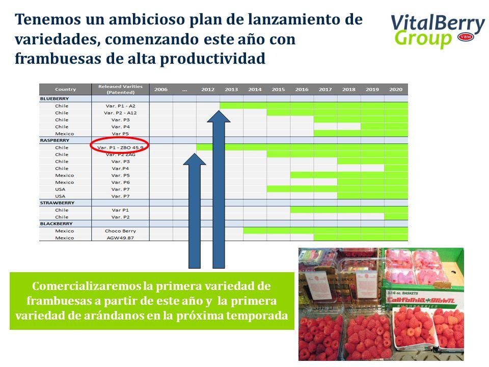 Tenemos un ambicioso plan de lanzamiento de variedades, comenzando este año con frambuesas de alta productividad Comercializaremos la primera variedad
