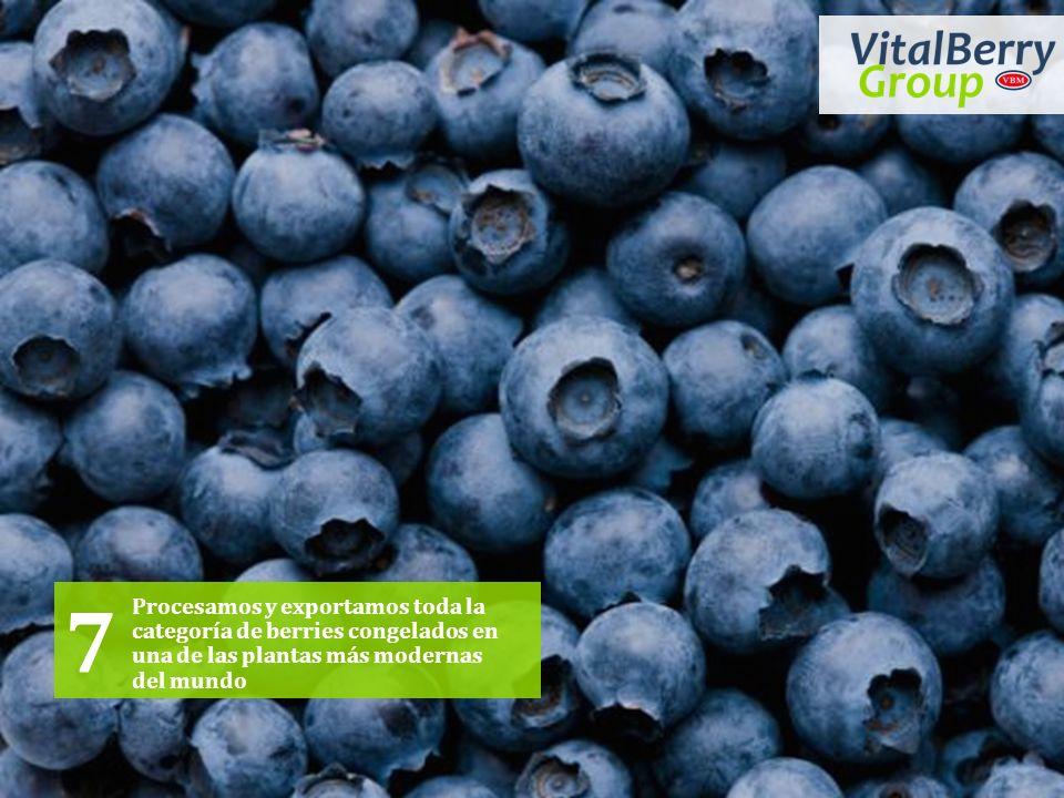Procesamos y exportamos toda la categoría de berries congelados en una de las plantas más modernas del mundo 7