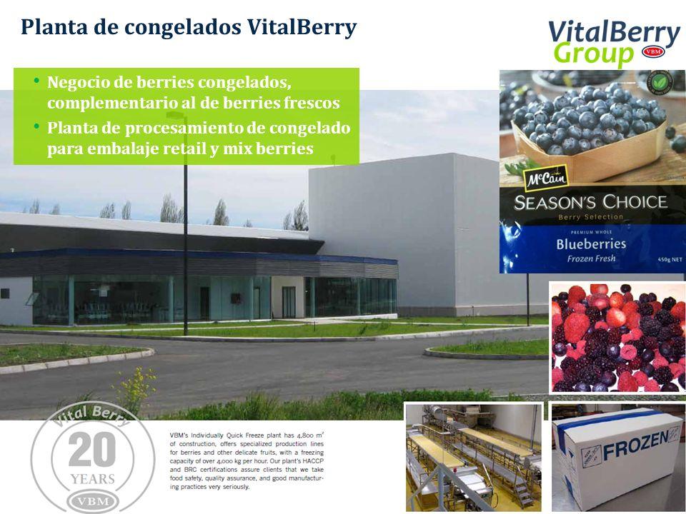 Planta de congelados VitalBerry Negocio de berries congelados, complementario al de berries frescos Planta de procesamiento de congelado para embalaje