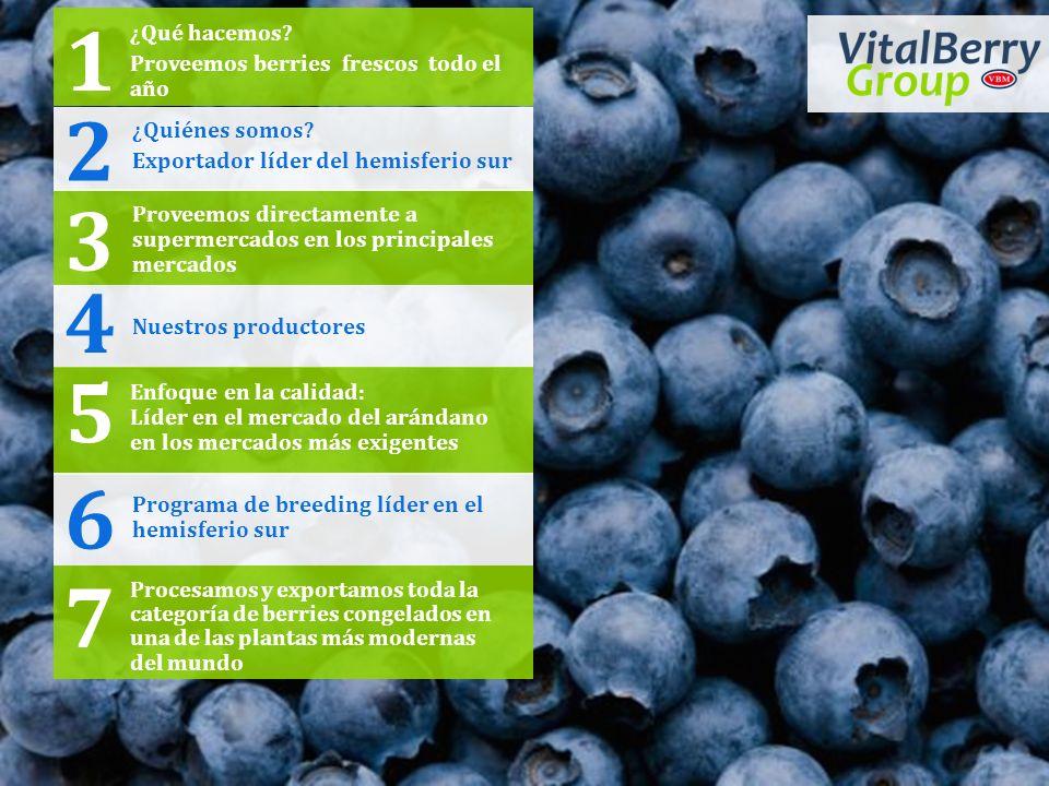 Procesamos y exportamos toda la categoría de berries congelados en una de las plantas más modernas del mundo 7 ¿Qué hacemos? Proveemos berries frescos