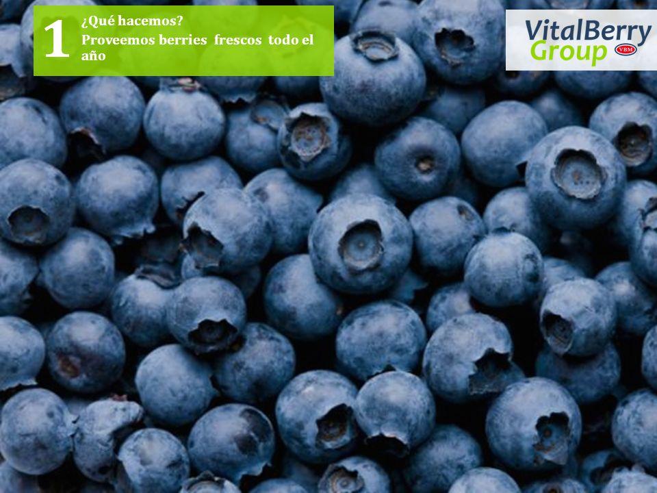 ¿Qué hacemos? Proveemos berries frescos todo el año 1