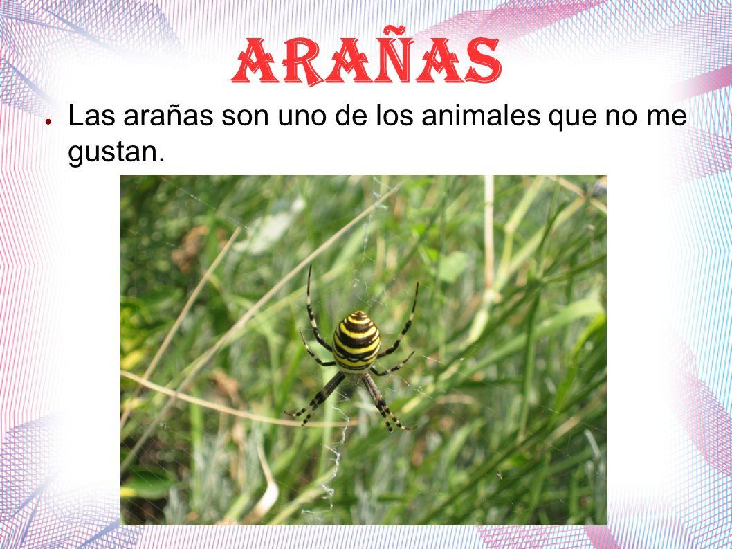 ARAÑAS Las arañas son uno de los animales que no me gustan.