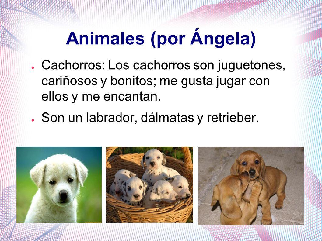 Animales (por Ángela) Cachorros: Los cachorros son juguetones, cariñosos y bonitos; me gusta jugar con ellos y me encantan. Son un labrador, dálmatas