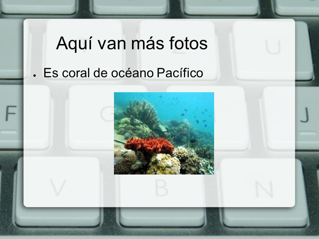 Aquí van más fotos Es coral de océano Pacífico