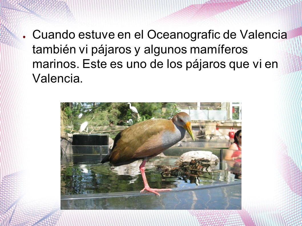 Cuando estuve en el Oceanografic de Valencia también vi pájaros y algunos mamíferos marinos. Este es uno de los pájaros que vi en Valencia.