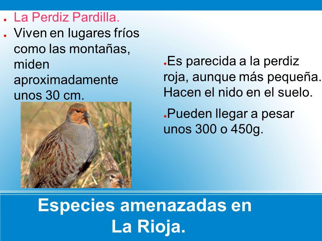 Especies amenazadas en La Rioja. Es parecida a la perdiz roja, aunque más pequeña. Hacen el nido en el suelo. Pueden llegar a pesar unos 300 o 450g. V