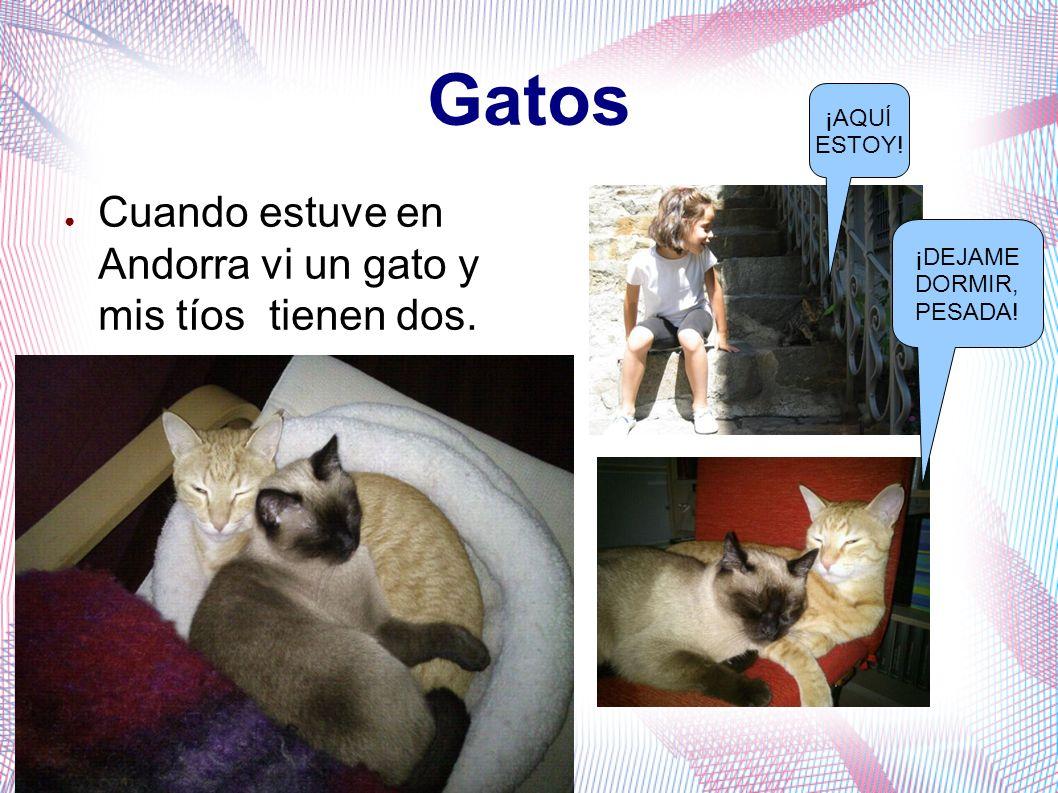 Gatos Cuando estuve en Andorra vi un gato y mis tíos tienen dos. ¡AQUÍ ESTOY! ¡DEJAME DORMIR, PESADA!
