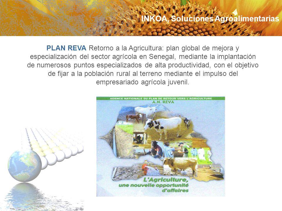 PLAN REVA Retorno a la Agricultura: plan global de mejora y especialización del sector agrícola en Senegal, mediante la implantación de numerosos punt