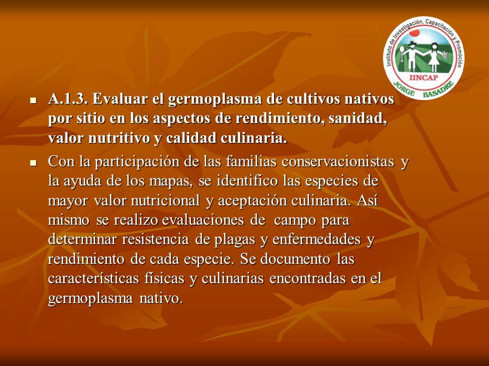 A.1.3. Evaluar el germoplasma de cultivos nativos por sitio en los aspectos de rendimiento, sanidad, valor nutritivo y calidad culinaria. A.1.3. Evalu