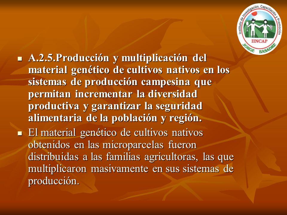 A.2.5.Producción y multiplicación del material genético de cultivos nativos en los sistemas de producción campesina que permitan incrementar la divers