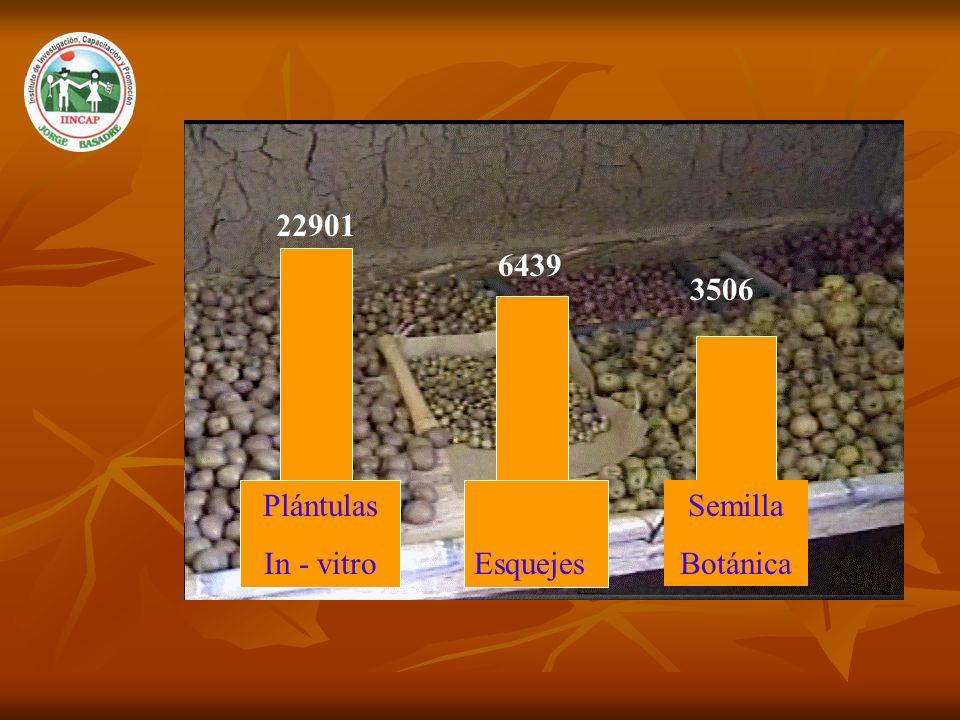 22901 Plántulas In - vitroEsquejes Semilla Botánica 6439 3506