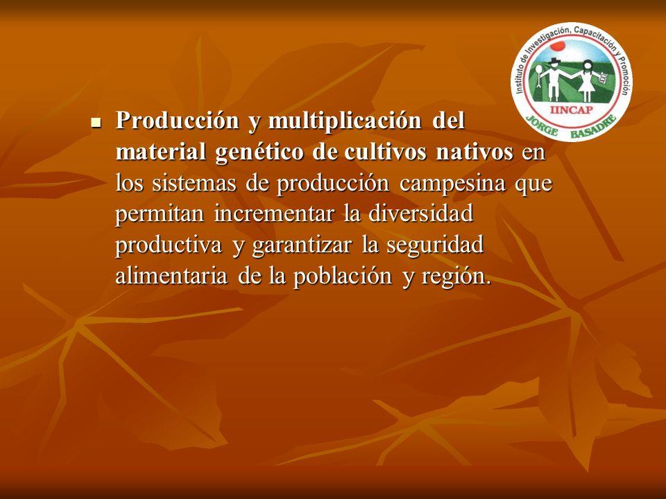 Producción y multiplicación del material genético de cultivos nativos en los sistemas de producción campesina que permitan incrementar la diversidad p