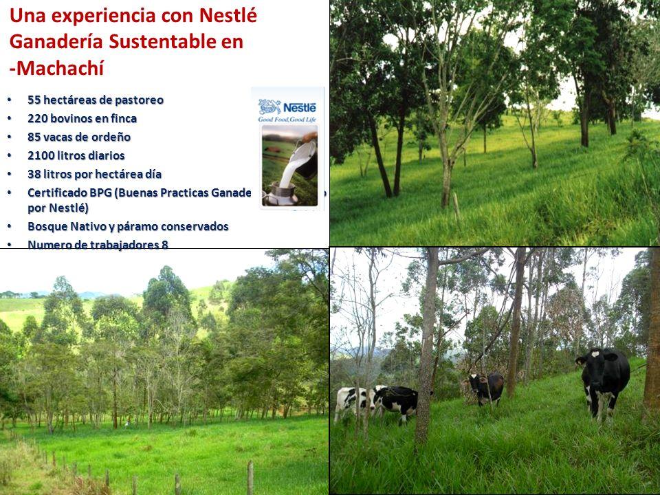 55 hectáreas de pastoreo 55 hectáreas de pastoreo 220 bovinos en finca 220 bovinos en finca 85 vacas de ordeño 85 vacas de ordeño 2100 litros diarios
