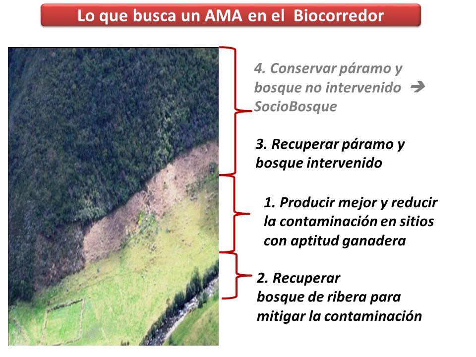 Lo que busca un AMA en el Biocorredor Actividades de conservación que le interesan al propietario (beneficio propio): Protección de fuentes de agua, P