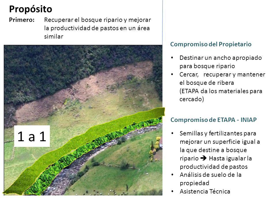 Propósito Primero: Recuperar el bosque ripario y mejorar la productividad de pastos en un área similar Compromiso de ETAPA - INIAP Semillas y fertiliz