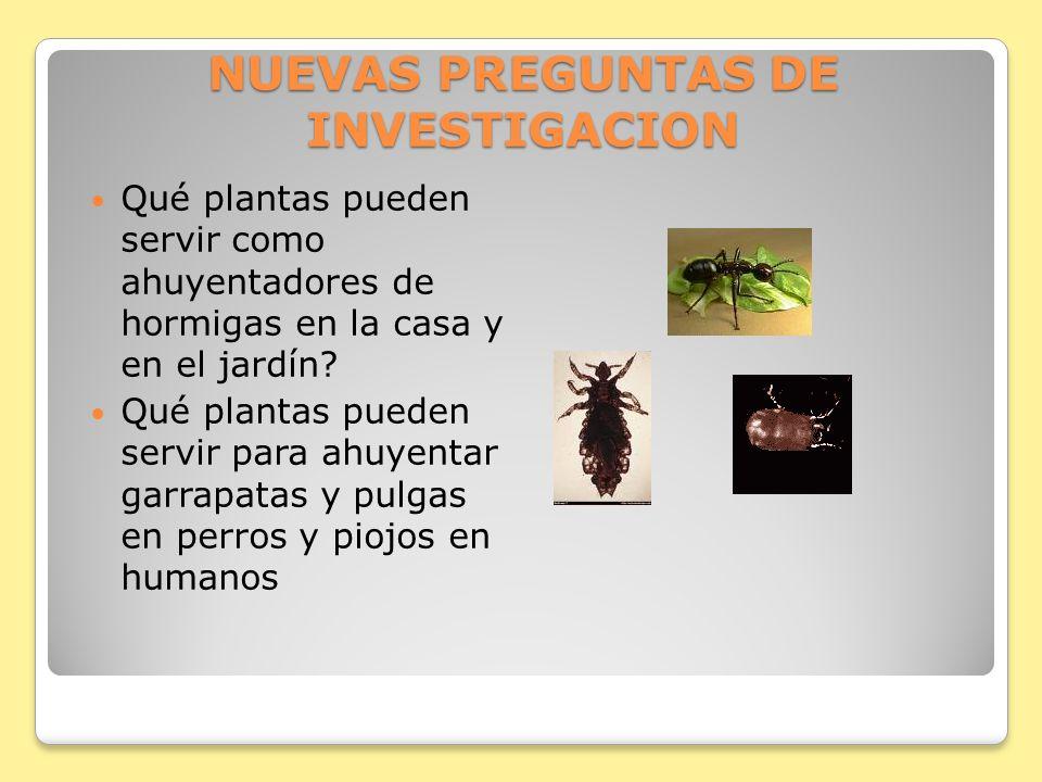 NUEVAS PREGUNTAS DE INVESTIGACION Qué plantas pueden servir como ahuyentadores de hormigas en la casa y en el jardín? Qué plantas pueden servir para a