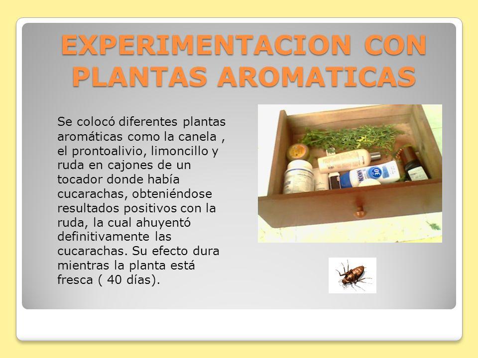 EXPERIMENTACION CON PLANTAS AROMATICAS Se colocó diferentes plantas aromáticas como la canela, el prontoalivio, limoncillo y ruda en cajones de un toc