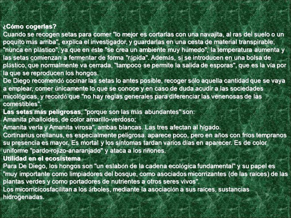 CANTARELLA COMUN (Rebozuelo)