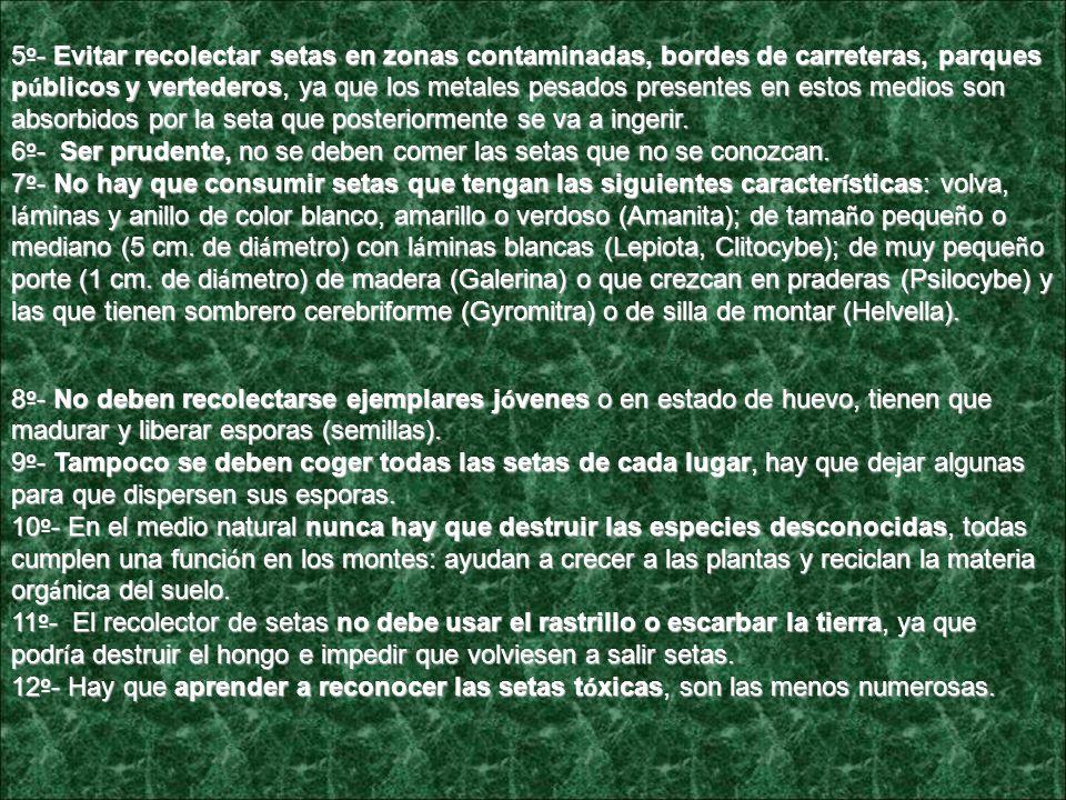 Consejos b á sicos ante las setas, No te confundas Andaluc í a es la regi ó n europea de mayor diversidad de setas y trufas, con m á s de 3.800 especies, en particular en las sierras de Aracena y Norte de Sevilla Consejos b á sicos ante las setas, No te confundas Andaluc í a es la regi ó n europea de mayor diversidad de setas y trufas, con m á s de 3.800 especies, en particular en las sierras de Aracena y Norte de Sevilla La Consejer í a de Medio Ambiente, dentro de la campa ñ a No te confundas , divulga 12 consejos b á sicos para la recolecci ó n y consumo de setas con los que se pretende proporcionar conocimientos sobre las intoxicaciones y confusiones de las setas recolectadas en los montes.